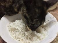 Можно ли давать рис кошке?