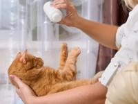Сухой шампунь для котов