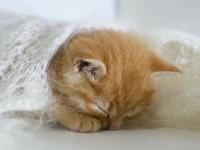 Как уложить гиперактивного котенка спать
