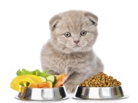 Вес здорового котенка в 3 месяца