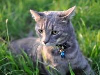 Капли от блох для кошек на холку