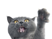Почему кошка ведет себя неадекватно?