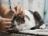 Капли для ушей для кошек
