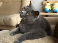Через сколько котятся кошки?