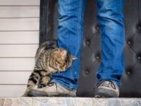Почему кошки трутся об ноги?