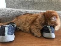 Почему кошки любят обувь?