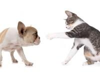 Что делать, если кошка поцарапала глаз собаке?