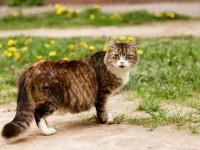 Основные признаки беременности у кошек