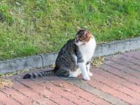 Способы определения срока беременности кошки