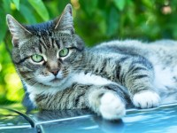 Сколько должна весить кошка?