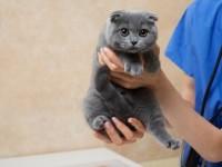 Когда лучше проводить стерилизацию кошки