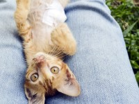 У кошки помутнел один глаз