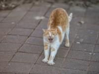 Причины, по которым коты чихать и у них сопли