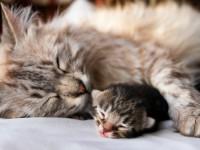 Как кошка воспитывает своих котят?