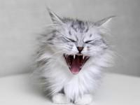 Инкубационный период бешенства у кота