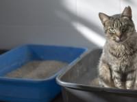 Как заставить кошку сходить в туалет?