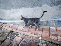 Сколько гуляет кошка в первый раз