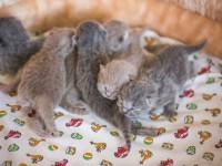 Как помочь котенку, который умирает