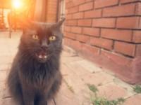 Почему кошка отрыгивает шерсть?