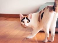 Почему кошки показывают свою задницу?