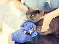 С какого возраста можно начинать стричь ногти коту