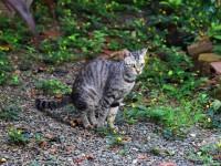 Что делать если кот какает слизью