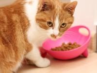 Как и чем нужно кормить беременную кошку?