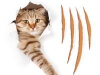 Обои, которые не дерут кошки