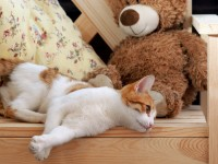 Почему кошка часто дышит животом?