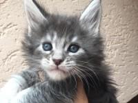 Когда кошка становится взрослой?