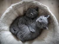 Котенок дрожит — причины