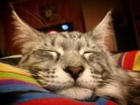 Методы лечения лишая у кошки в домашних условиях