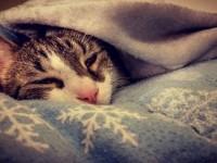 Как лечить котенка, который простыл