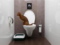 Что делать, если кот ходит в туалет с кровью