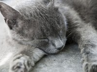 Что делать, если кот часто дышит?