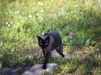 Как можно приучить кота ходить в лоток