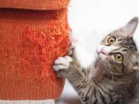 Как защитить стены от кота?