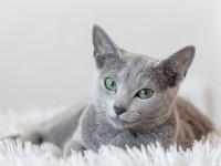 Что делать, если у кошки понос в домашних условиях?