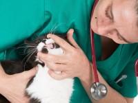Как лечить кошку от анемии?
