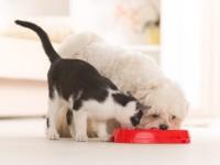 Чем отличается кошка от собаки?