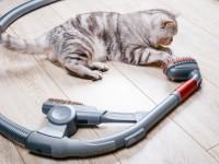 Почему коты боятся пылесоса?