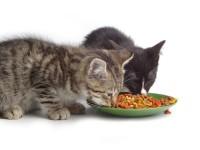 Доктор Клаудер — корм для кошек