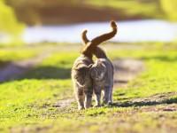 Когда кошки начинают гулять