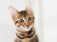Таблетки для кошки от хотения кота