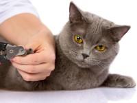 Как удалить когти коту