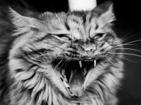 Есть ли у кошек молочные зубы