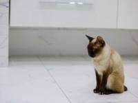 Чем лечить понос у кота в домашних условиях?
