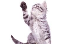 Что делать, если котенок не ходит в туалет по большому?