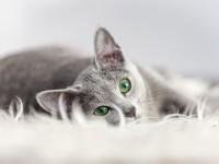 Сколько дней кошка вынашивает котят