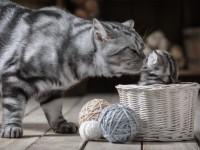 Почему кошка ест своих котят?